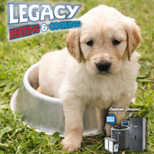 How A Pet Can Impact Your HVAC System